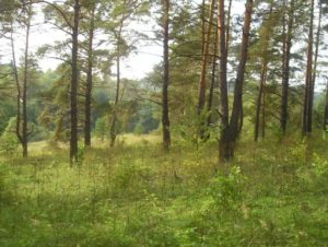 На Ичинском городище, Алтухово