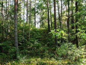 Вал в лесу на городище Радовище
