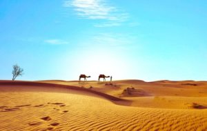 Тур до Єгипту - екскурсія в пустелю