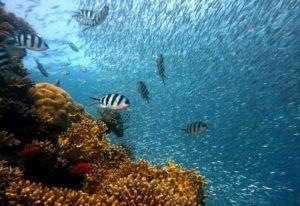 Кораловий риф